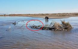 Hơn 1.200 con chim chết la liệt tại hồ nước ở Mỹ: Tiết lộ nguyên nhân đáng lo ngại