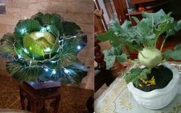 Đỉnh cao của chơi hoa Tết: Từ bắp cải, súp lơ đến cây cà rốt đều lên bàn khách