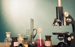Khoa học đã làm một thí nghiệm kéo dài đến 500 năm và chúng ta đã có kết quả đầu tiên