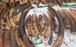 Bắt giữ lô hàng hơn 2 tấn ngà voi và vảy tê tê được khai báo là gỗ gõ