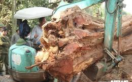 Dân làng mua thùng container 40 triệu đồng, cử 23 người bảo vệ gỗ cây sưa trăm tuổi vừa đốn hạ