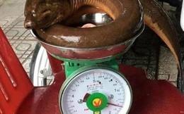 """Nghệ An: Người dân bắt được con lươn """"khủng"""" nặng 1,6 kg"""