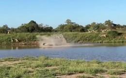 Video: Linh dương đầu bò 2 lần làm bẽ mặt bầy sư tử đói với màn đào tẩu ngoạn mục