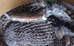 """Làng ăn cá """"cực độc"""" vẫn bảo toàn tính mạng: Hội Nghề cá """"giải mã"""""""