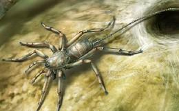Quái vật nửa nhện, nửa bọ cạp ở Nam Phi