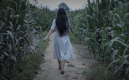 """Phát hiện ruộng ngô của mình hay bị trộm, ông chú nông dân tung """"chiêu độc"""" khiến kẻ gian tái mặt, khóc thét suốt đêm"""