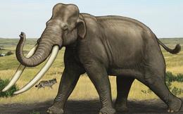 Siêu voi khổng lồ - Sinh vật nặng 15 tấn bị lãng quên hàng nghìn năm trên Trái Đất