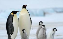 Làm sao để la bàn cho ta biết đâu là cực Bắc khi đang ở cực Nam?