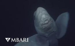 Hình ảnh hiếm có đầy ấn tượng của 'cá mập ma' dưới đại dương