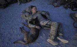 """TQ mỉa mai đặc nhiệm Mỹ ở miền bắc Syria: """"Đến chó cưng họ còn bỏ rơi""""?"""