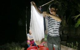 Ảnh: Nông dân Hải Dương chong đèn thu hoạch rươi đầu mùa, thu 50 triệu đồng mỗi đêm