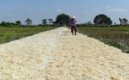 24h qua ảnh: Nông dân phơi lông gà trên đường ở Hà Nội
