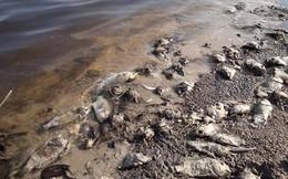 Cá tự nhiên chết hàng loạt do nước lòng hồ ô nhiễm