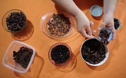 Gia đình nuôi bọ cánh cứng, kiến, gián… để ăn suốt 3 năm nay: 'Chúng có vị như khoai tây chiên'