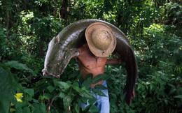 24h qua ảnh: Ngư dân Brazil bắt được cá hải tượng khổng lồ