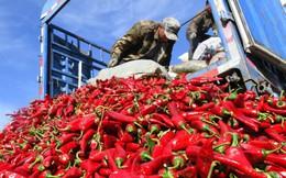 24h qua ảnh: Nông dân Trung Quốc vào mùa thu hoạch ớt