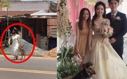 Cô dâu vội vã chạy sang đường để lôi cún cưng về nhà chụp cùng trong đám cưới