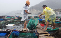 Người dân chạy đua với bão Nakri, vớt tôm cá trước giờ bão đổ bộ