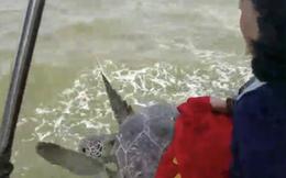 Hải Phòng: Thả rùa quý hiếm nặng 25kg về môi trường tự nhiên