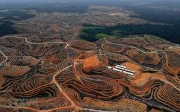 Indonesia lên kế hoạch xây dựng thủ đô mới ở tỉnh Kalimantan