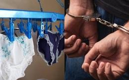 Giáo sư Nhật Bản bị bắt vì trộm đồ lót