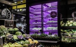 Mỹ: Công nghệ cho phép chuỗi bán rau trồng ngay tại cửa hàng