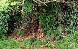 Xác định danh tính thi thể không đầu trong vườn điều ở Bình Phước