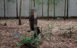 Người đàn ông chết trong tư thế treo cổ trên cây cao su, chân còn chạm đất