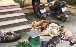 Băng nhóm Hà Nội lên Hoà Bình bắt trộm hơn 130kg chó