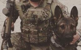 """Những chú chó nghiệp vụ đã bị Quân đội Mỹ """"vắt chanh bỏ vỏ"""" như thế nào?"""