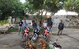 Bắt giữ nhóm trộm chó khét tiếng, thu nhiều vũ khí nóng
