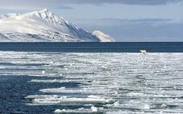 Băng tan ở Bắc Cực sẽ làm xuất hiện virus tiêu diệt hàng loạt động vật biển