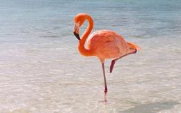 Video: Vì sao chim hồng hạc có màu hồng?