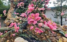 Mãn nhãn cây đào dáng huyền độc nhất Việt Nam, nặng 2 tấn ghép từ hàng nghìn viên đá quý
