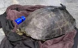 """Câu trộm rùa hơn 10kg ở Hồ Gươm: Một """"cần thủ"""" đã chạy thoát"""
