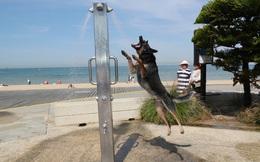 24h qua ảnh: Chú chó giải nhiệt dưới cột phun nước ở Australia