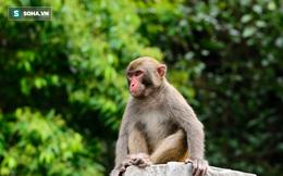Thi nhau đi bắt khỉ vì bán được giá cao, bao người mất trắng cả gia sản chỉ sau 1 đêm