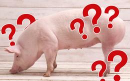 Giá thịt lợn tăng mạnh, tim lên đến 305.000VND/kg và đây là 'báo giá' thịt để chị em tham khảo trước khi đi chợ