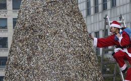 24h qua ảnh: Cây thông Giáng sinh khổng lồ từ đầu mẩu thuốc lá