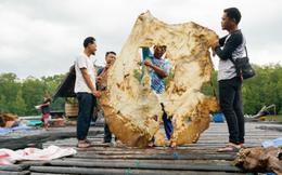 Câu hỏi dễ mà khó: Loài cá nước ngọt nào lớn nhất thế giới?
