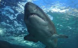 Phát hiện xương người trong bụng cá mập