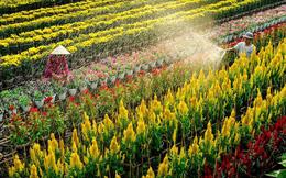 Làng hoa Sa Đéc miễn phí tham quan từ 1/1/2020