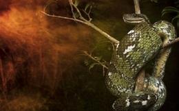 Kẻ gác đêm: Bí mật triệu năm của loài trăn khổng lồ, chỉ có duy nhất ở 1 nơi trên Trái Đất