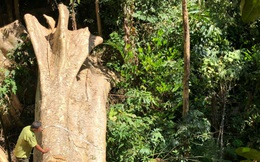 Một vụ phá rừng, sở báo 3,5m3, hạt nói 28m3, công an xác định 41m3!