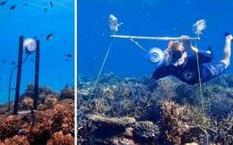 Lắp loa dưới nước để hồi sinh các rặng san hô chết