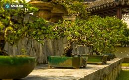 Cây bonsai 400 tuổi, giá 50.000 USD ở Nhật bị trộm: Chủ nhân đưa ra lời khẩn cầu hiếm có