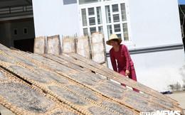 Làng nghề làm bánh tráng ở Bình Định rộn rã những ngày cuối năm