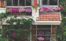 Khu vườn 300m² với hàng trăm loài hoa đua nhau khoe sắc của cô gái 9x xinh xắn
