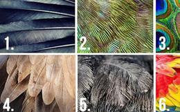 Chọn chiếc lông chim nào cũng thể hiện tính cách của bạn