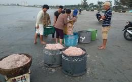 Ngư dân Đà Nẵng trúng đậm ruốc, hưởng lộc biển ngày cuối năm